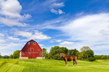 Agriculture Landscape With Old Red Barn