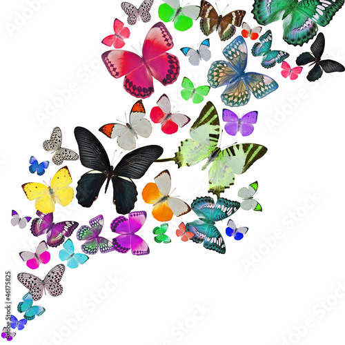 Tuinposter Vlinders Colorful background with butterfly