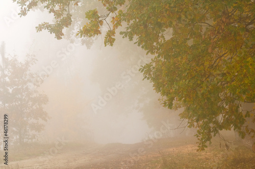 Garden Poster Forest in fog Autumn mist