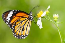 Closeup Butterfly On Flower