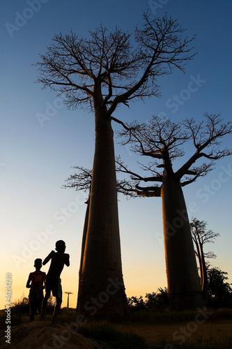 In de dag Baobab Baobab alley, Madagascar