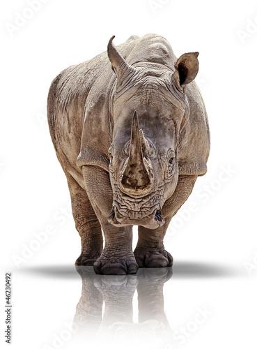 Tuinposter Neushoorn Breitmaulnashorn - white rhino