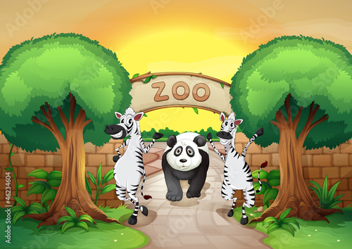 Wall Murals Bears a zoo and the animals