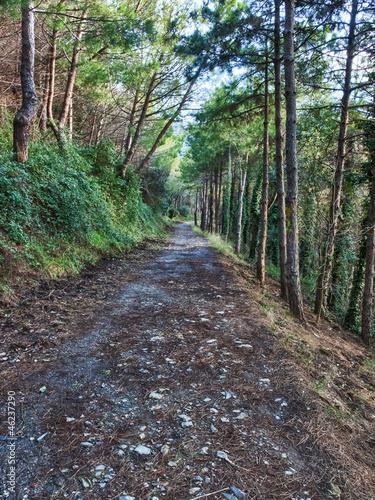 Foto op Canvas Weg in bos strada attraverso il Bosco