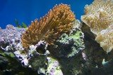 Fototapeta Fototapety do akwarium - Coral reefs