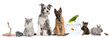 Group of pets with dog, cat, rabbit, ferret, fish, frog, rat