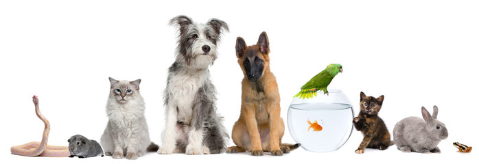 Grupa zwierząt domowych z psem, kotem, królikiem, fretką, rybą, żabą, szczurem