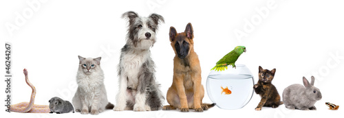 Obraz Group of pets with dog, cat, rabbit, ferret, fish, frog, rat - fototapety do salonu