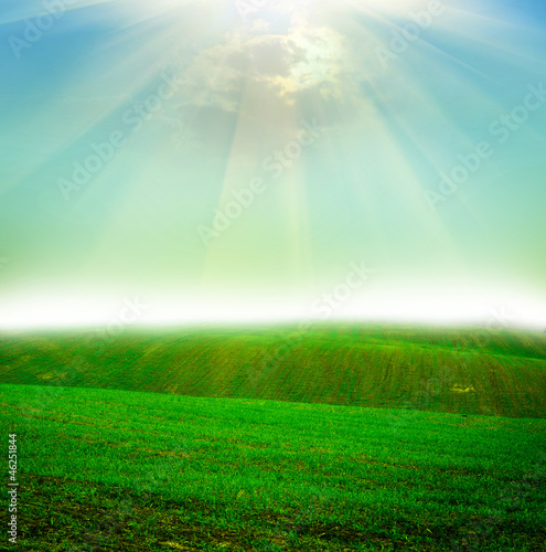 Photo Stands Green field at sunset