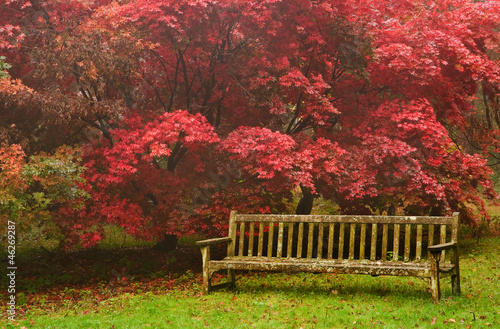 Fotobehang Bordeaux Beautiful Autumn Fall nature image landscape