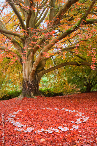 Photo Stands Coral Beautiful Autumn Fall nature fairy ring mushrooms