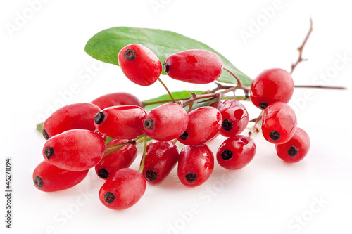 Barberry with leaves isolated on a white background Wallpaper Mural