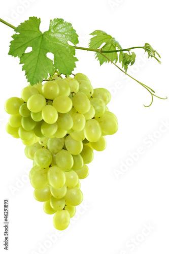 Fotografia, Obraz  Grape leaves isolated