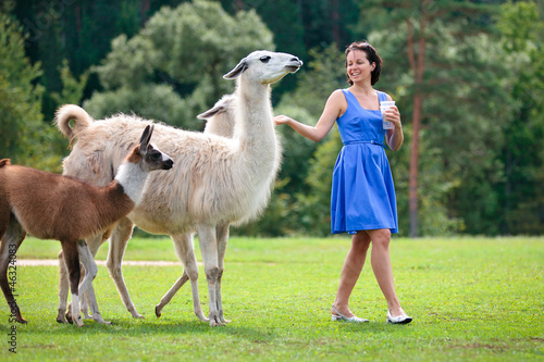Poster Lama Young attractive woman feeding a group of lama