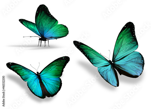 Fototapeta  Three turquoise butterfly, isolated on white background