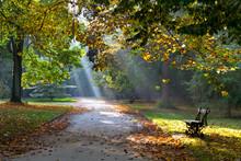 Path In The Autumn Park. Sunlight. Walking.