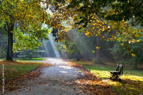 sloneczna-sciezka-w-parku-jesienia