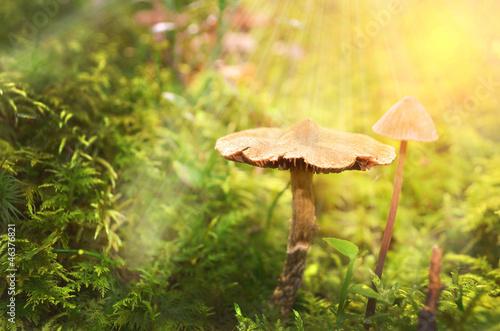Fotografie, Obraz  Märchenhafter Waldboden