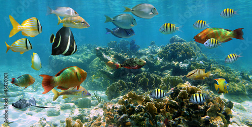 Poster Coral reefs Underwater panorama coral reef with shoal of colorful tropical fish, Caribbean sea