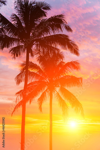 Tuinposter Palm boom Two palm and beautiful sunset