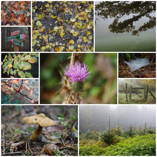 Collage von verschiedenen Wald-Fotos © Arnold