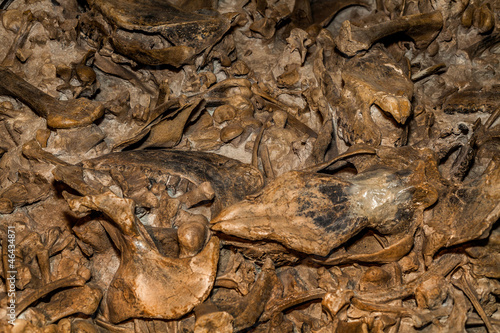 Fotografia  Lots of Fossils of Prehistoric Creatures in a Pile