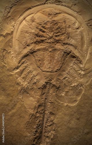 Tela  Fossil of a Prehistoric Creature
