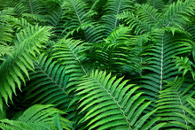 Fern. Abstract Background.
