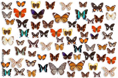 Fotografie, Obraz  butterflies