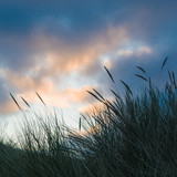 Winter an der Nordsee, Juist, Dünen im Abendlicht