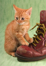 Chaton Et Chaussure