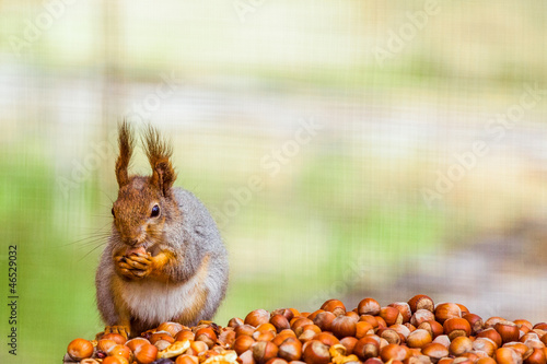 Deurstickers Eekhoorn Photo of squirell eating nut