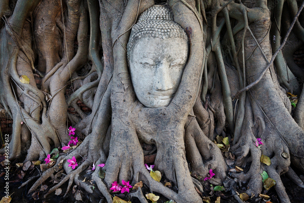 Fototapety, obrazy: Head of Sandstone Buddha in The Tree Roots at Wat Mahathat