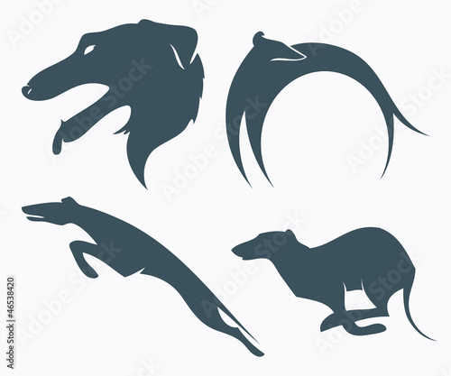 Fotografia Borzoi dog - vector illustration