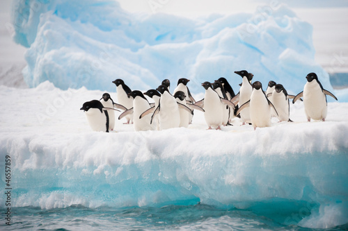 Photo Stands Antarctic Penguins on the snow