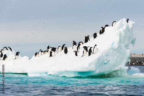 Tuinposter Antarctica Penguins on the snow