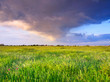 Bright meadow and sky. Fresh summer composition