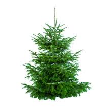 Schöner Tannenbaum Ungeschmückt