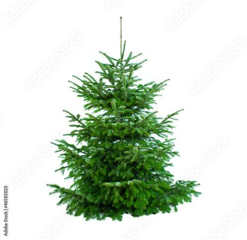 Fototapeta schöner tannenbaum ungeschmückt obraz