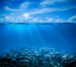 Leinwandbild Motiv Underwater coral reef seabed view with horizon and water surface