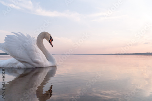 Foto op Aluminium Zwaan swan