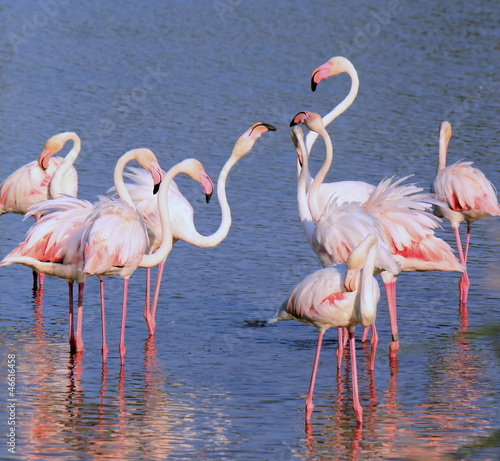 Group of flamingos #46616458