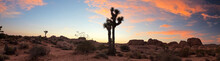 Joshua Tree National Park At Sunset With Lonely Tree, USA.