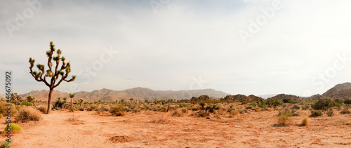 Ingelijste posters Wit Joshua Tree National Park, USA. Panoramic shot.