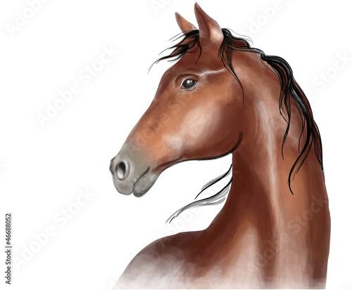 Photo  Arabian horse