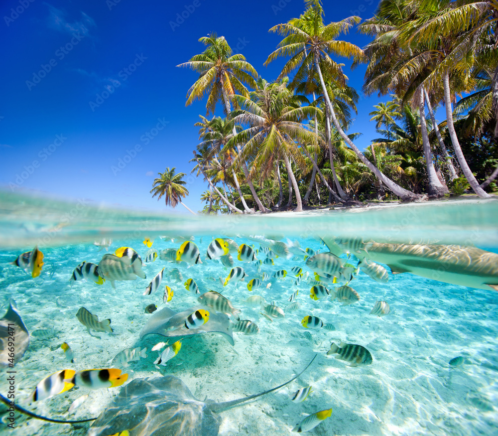Fototapeta Tropical island above and underwater