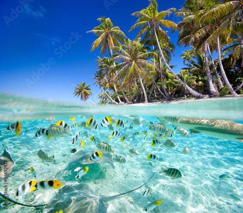 Fotografía Tropical island above and underwater