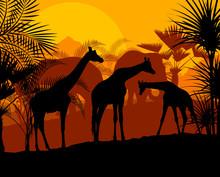 Giraffe At Sunset Vector Background
