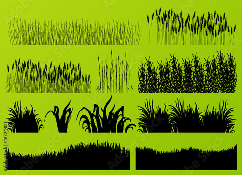 Fototapeta Plants, grass and flowers detailed silhouettes