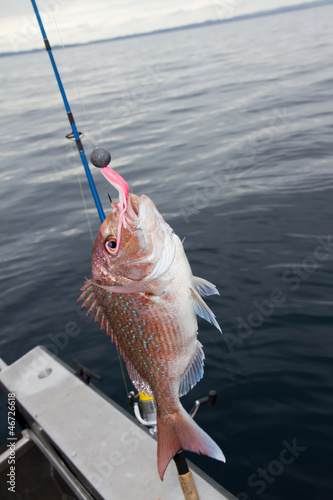 Soft Bait Snapper Fishing
